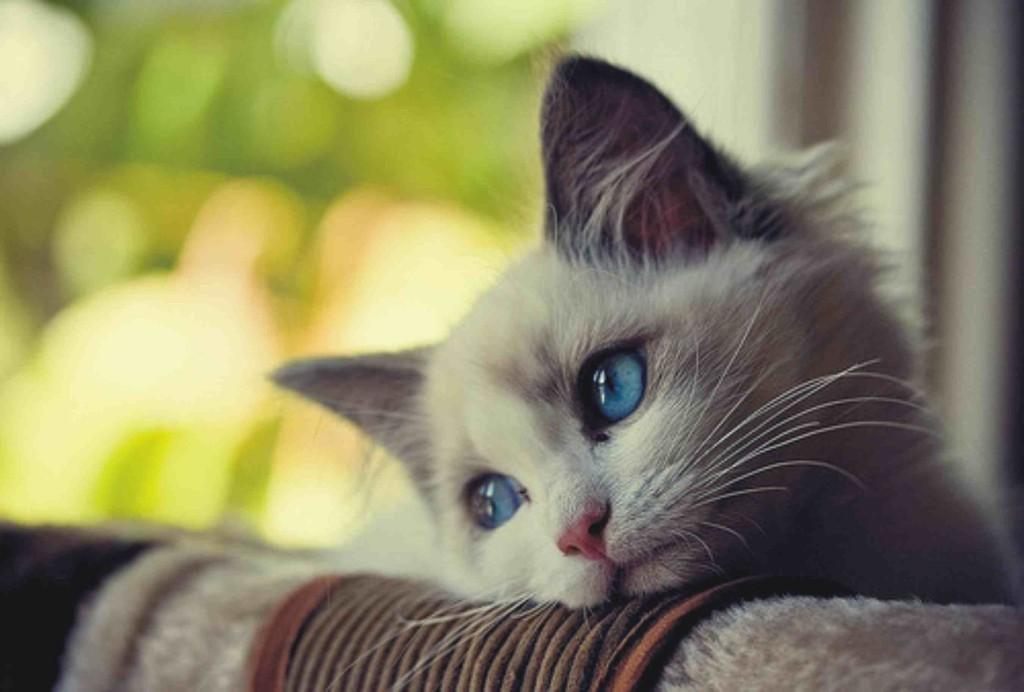 imagen de gato triste